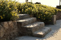 Escadaria de pedra com flores selvagens, em Akko, Israel imagens de stock
