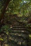 Escadaria de pedra na selva fotos de stock royalty free