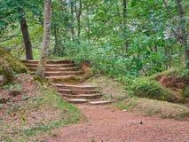Escadaria de pedra no parque Foto de Stock
