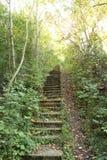 Escadaria na floresta imagens de stock