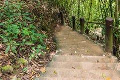 Escadaria na floresta Fotos de Stock