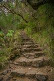 Escadaria no wildness Imagens de Stock Royalty Free