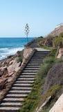 Escadaria pelo oceano com planta da agave. Fotos de Stock