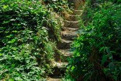 Escadas à terra em torno das plantas fotos de stock royalty free