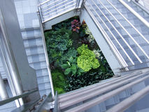 Escadas Imagem de Stock Royalty Free