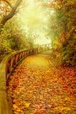 Escadas cobertas com as folhas douradas Imagem de Stock Royalty Free