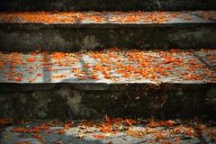 Escadas com as flores e luzes alaranjadas da queda Foto de Stock