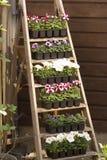 Escadas com flores Fotografia de Stock