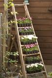 Escadas com flores Foto de Stock Royalty Free