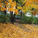 Escadas com folhas Foto de Stock Royalty Free