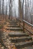 Escadas da floresta Imagens de Stock Royalty Free