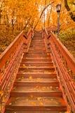 Escadas de madeira com as folhas na floresta do outono fotografia de stock royalty free