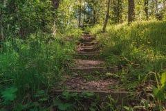 Escadas de madeira ensolaradas brilhantes no meio da floresta que vai acima com ?rvores ao redor foto de stock royalty free