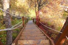 Escadas de madeira na queda Imagens de Stock