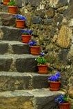 Escadas de pedra com flores Imagem de Stock