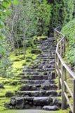 Escadas de pedra no jardim japonês Fotografia de Stock