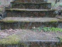 Escadas de pedra velhas com os arvoredos dos arbustos Escadas na selva A natureza destrói cruelmente os traços imagem de stock