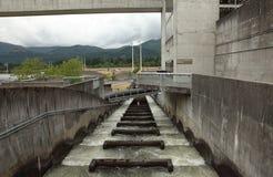 Escadas de peixes, Bonneville Oregon. fotografia de stock royalty free