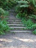 Escadas do bosque Fotos de Stock Royalty Free