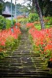 Escadas do jardim com flores Imagem de Stock