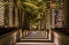 Escadas e palmeiras Fotos de Stock Royalty Free