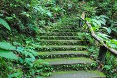 Escadas e passagens com musgo fotos de stock