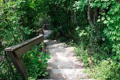 Escadas em baixo para baixo nas madeiras verdes imagens de stock royalty free