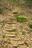 Escadas na floresta fotografia de stock royalty free
