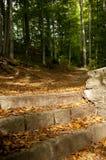 Escadas na floresta Fotografia de Stock
