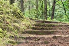 Escadas na floresta Fotos de Stock Royalty Free