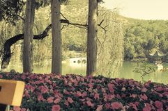 Escadas nas flores do waterViolet e no fundo preto de Dragon Pool imagens de stock royalty free