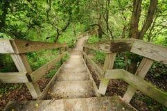 Escadas nas madeiras Imagem de Stock