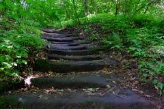 Escadas nas madeiras Imagens de Stock Royalty Free