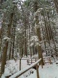 Escadas nevados com os corrimão em montanhas polonesas fotografia de stock royalty free