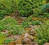 Escadas no jardim coberto de vegetação verde Fotografia de Stock Royalty Free
