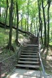 Escadas no parque com árvores grandes Fotografia de Stock Royalty Free