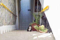 Escadas retirando-se amedrontadas do gato branco preto foto de stock