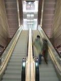 Escadas rolantes moventes Fotografia de Stock Royalty Free