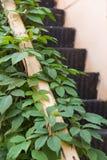 Escadas velhas do metal cobertas nas folhas Imagem de Stock Royalty Free