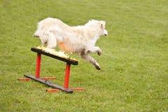 Escadron de chien de délivrance Photos libres de droits