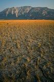 Escala de montanha com campo amarelo Foto de Stock