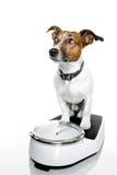 Escala del perro Fotos de archivo libres de regalías