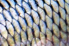 Escala dos peixes imagem de stock