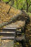 Escala en parque del otoño Fotos de archivo libres de regalías