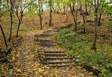 Escala en parque del otoño Foto de archivo
