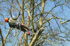 Escalada da árvore foto de stock royalty free