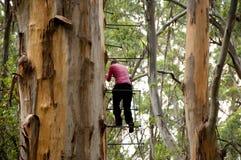 Escalada da árvore de Gloucester fotos de stock
