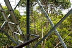 Escalada da árvore de Gloucester Fotografia de Stock Royalty Free