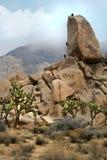 Escalada de los campistas en Joshua Tree National Park Imagen de archivo libre de regalías