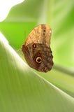 A escalada de uma borboleta imagem de stock